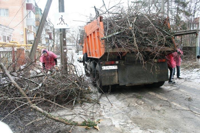вывоз-деревьев
