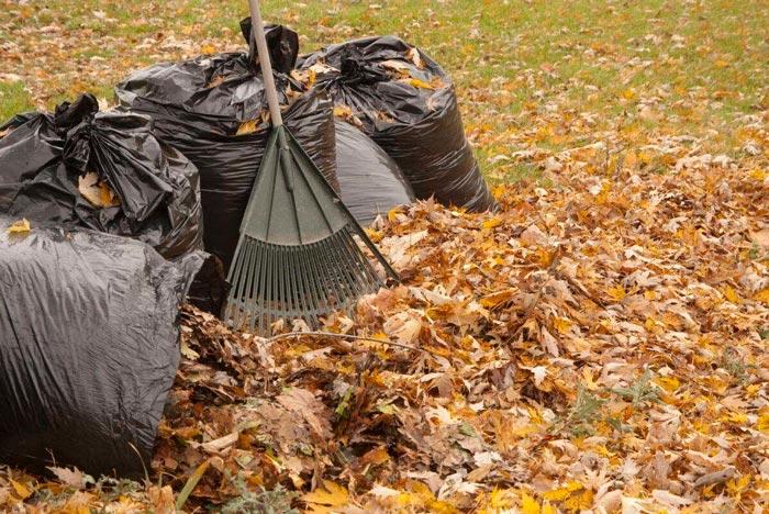 вывоз-листьев